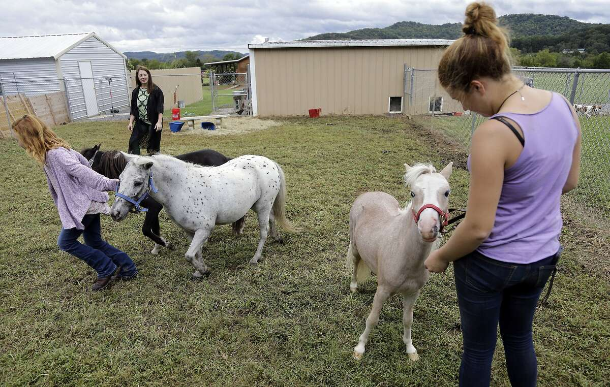 Stephanie Clegg Troxell, second from left, and her daughters Lily, 10, left, and McKendree, 14, right, tend to their mini-horses at the acreage where the family's animals are being kept Tuesday, Sept. 12, 2017, in Bradyville, Tenn. The family evacuated New Port Richey, Fla., before Hurricane Irma hit. The family caravan includes three cars and a trailer, five adults, five children, 13 dogs, three mini-horses and a pet pig. The trek from New Port Richey, Fla., north of Tampa Bay, took more than 17 hours, beginning last Wednesday. (AP Photo/Mark Humphrey)