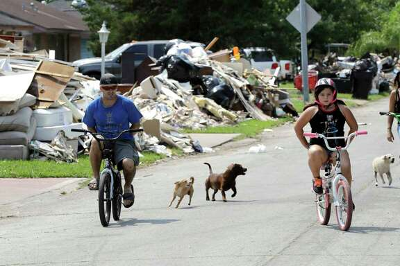 Dogs chase people riding their bicycles down a street lined with debris from flooded homes in the aftermath of Hurricane Harvey Wednesday, Sept. 6, 2017, in Houston. (AP Photo/David J. Phillip)