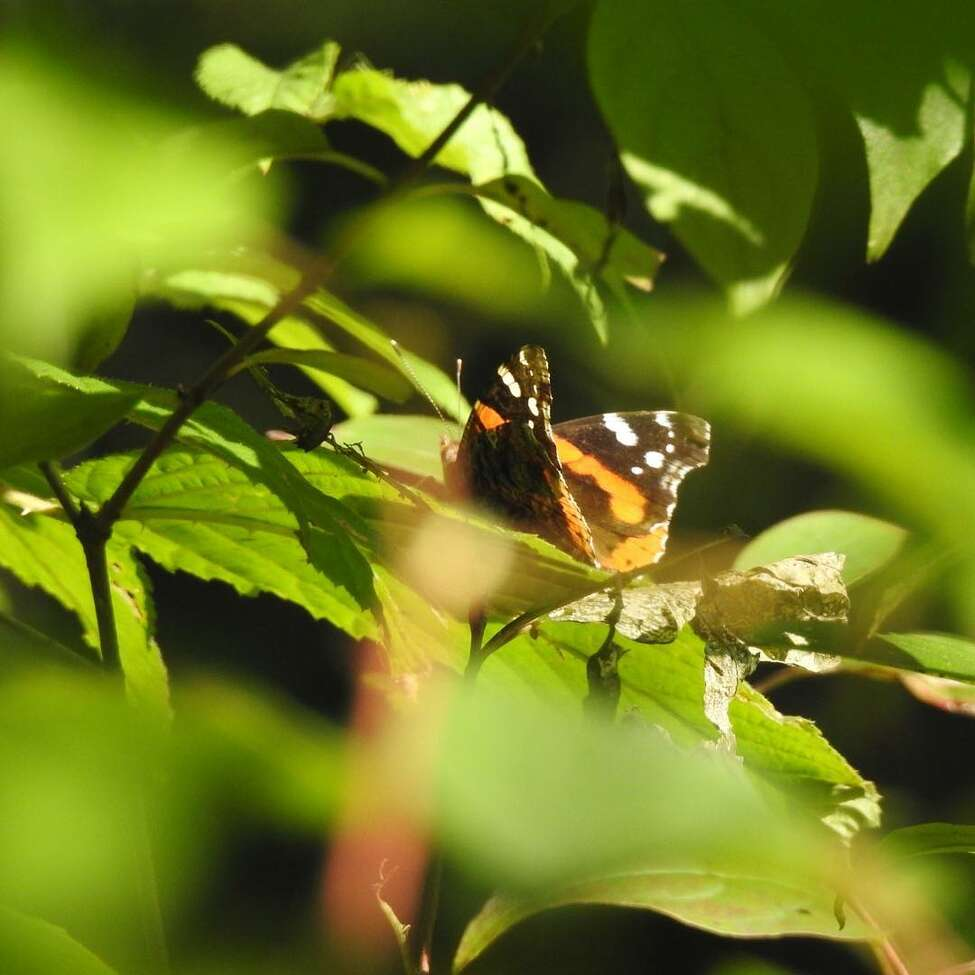 Albany Pine Bush Preserve: