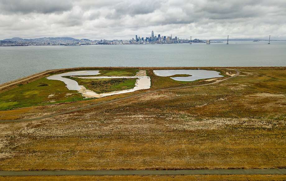 Grasslands cover an edge of Alameda Point, former site of the Naval Air Station Alameda, on Wednesday, Sept. 13, 2017, in Alameda, Calif. Resilient by Design Bay Area Challenge participants are examining the site as part of their efforts to find adaptations to climate change. Photo: Noah Berger, Special To The Chronicle