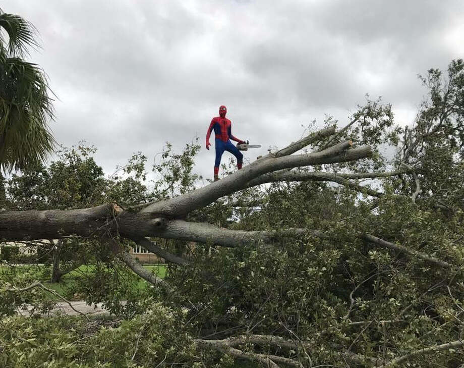 "Cheryl Hanbury of Bradenton, Florida took pictures of ""Spider-Man"" cutting down trees after Hurricane Irma hit.See the destruction Irma left in the Caribbean islands and Florida up ahead.  Photo: Cheryl Hanbury"