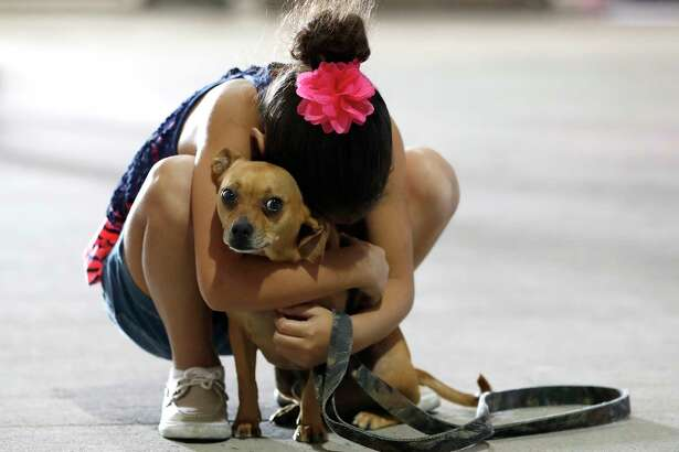Reniah Knight, 7, of Vidor, hugs her dog, Buster, who they located at the Houston SPCA, but they continued to look for thier two other missing dogs in the Pet Reunion Pavilion inside of NRG Arena, Wednesday, Sept. 13, 2017, in Houston.  They found one of their dogs at the SPCA, but the other two who were supposed to be there, where missing. Best Friends Animal Society, based in Utah, has partnered with the Harris County Public Health's Animal Shelter, Austin Pets Alive!, Houston Pets Alive!, and Houston PetSet.  This will act as a hub for families trying to locate their pets displaced by Tropical Storm Harvey.  ( Karen Warren / Houston Chronicle )
