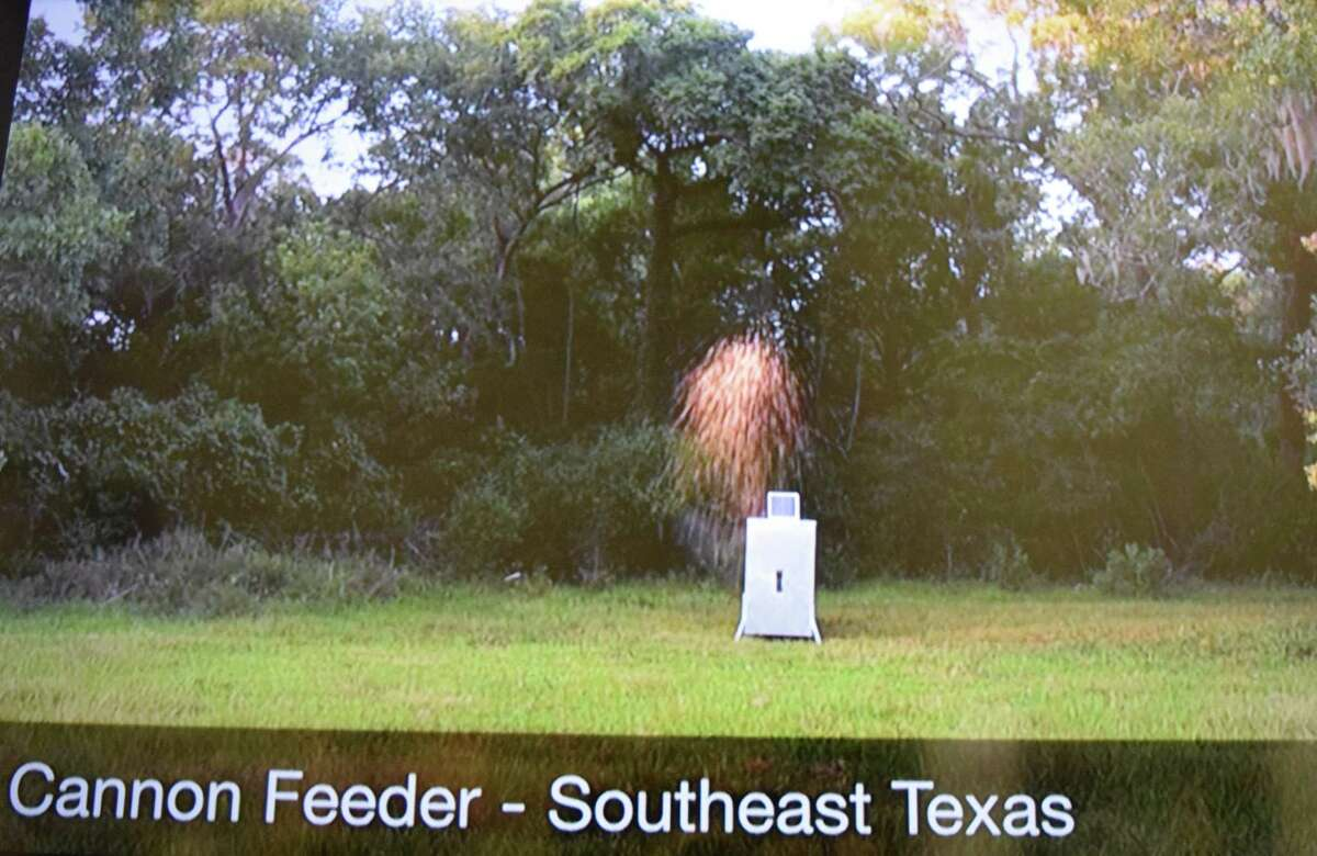 An innovative system to distribute feed to white-tailed deer shown in a video at the Texas Trophy Hunters Extravaganza shows how a compressed air cannon fires corn well away from the storage unit to overcome numerous problems encountered with spin feeders.