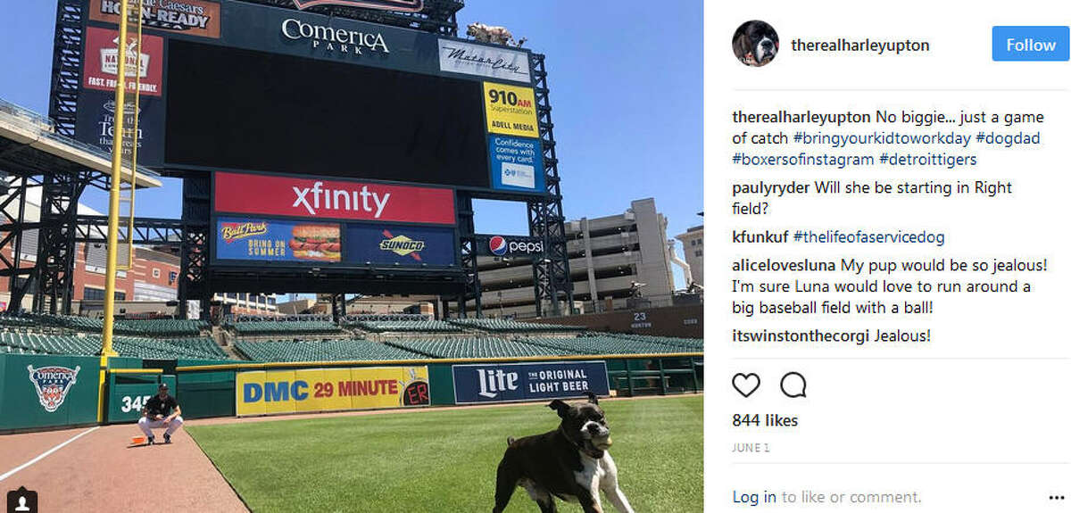 Her dog Harley loves Minute Maid Parkand is Instagram famous. PHOTOS: Harley Upton on Instagram