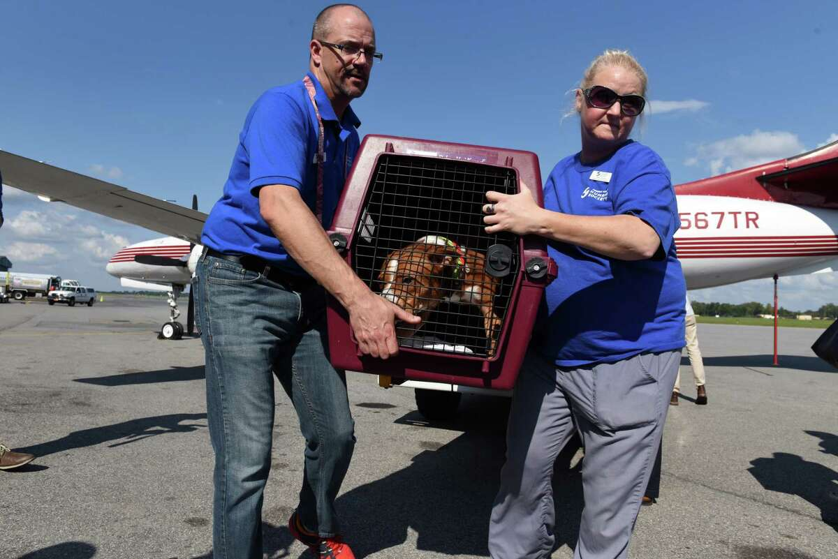 Todd Cramer, Mohawk Hudson Humane Society president and CEO, left, and Nancy Haynes, director of animal welfare, right, unload one of the 30 dogs that arrived from Palm Beach County Animal Care and Control in Palm Beach, Fla., on Friday, Sept. 15, 2017, at Albany International Airport in Colonie, N.Y. Fifteen cats and 30 dogs were evacuated following Hurricane Irma to make space for animals needing long-term shelter as they await reunion with their families. (Will Waldron/Times Union)