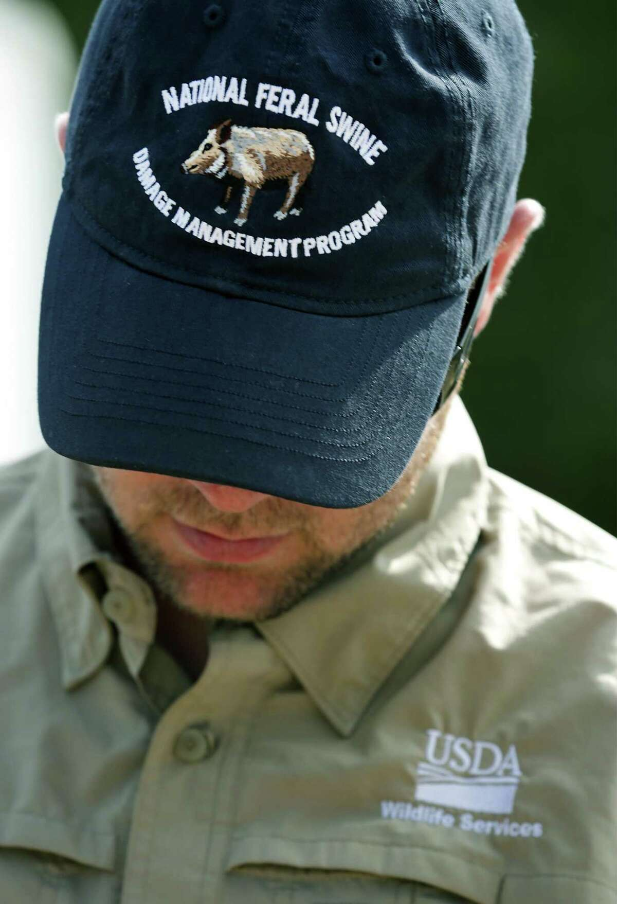 Nathan Snow, Research Biologist with USDA Wildlife Services, wears a hat featuring National Feral Swine Damage Management Program. USDA researchers harvested feral hogs taking their whiskers and a cutting from their tail to track the feeder delivery system being used is the brush at Camp Bullis, on Monday, Sept. 4, 2017. The 502d Civil Engineer Squadron of Joint Base San Antonio, located at JBSA Camp Bullis, is working with the USDA on the project.