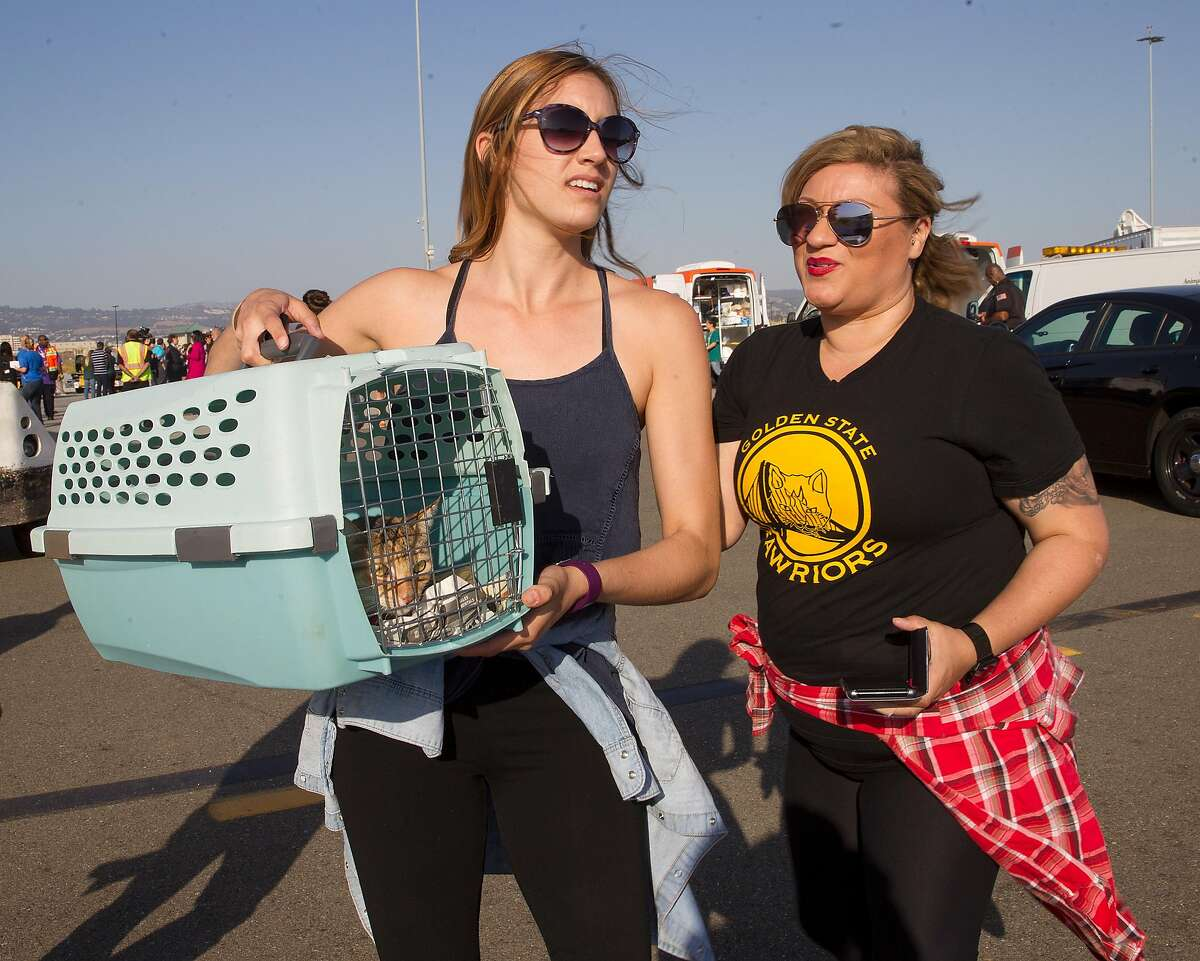Members from Hopalong Animal Rescue in Oakland bring in cats and dogs on Friday, September 15, 2017, in Oakland, Calif. There were more than 150 dogs and cats transported to FedEx in Oakland airport from Miami's hurricane Irma to be taken to no-kill shelters.