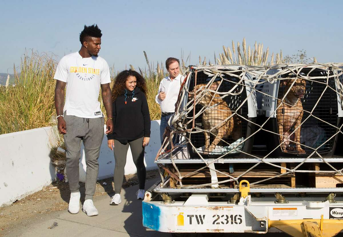 Warriors Jordan Bell (left) helps aid the delivery of more than 150 dogs and cats transported to no-kill shelters at FedEx in Oakland airport on Friday, September 15, 2017, in Oakland, Calif.