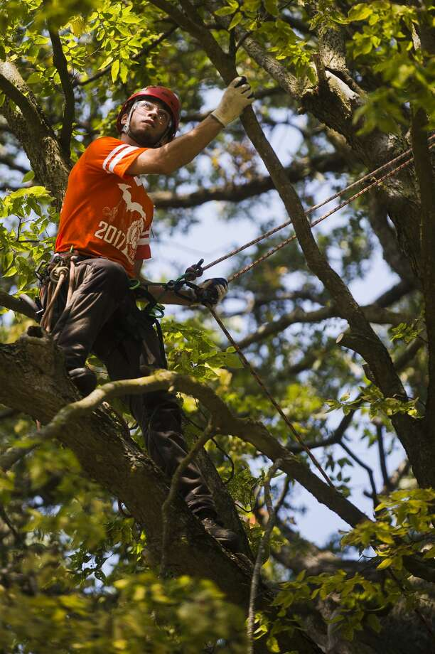 Cody Campbell of Sheridan competes in the work climb event during the Michigan Tree Climbing Championship hosted by the Arboriculture Society of Michigan on Saturday, September 16, 2017 at Emerson Park. (Katy Kildee/kkildee@mdn.net) Photo: (Katy Kildee/kkildee@mdn.net)