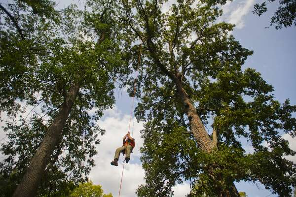 Corey Elder of Grand Ledge comes down after competing in the ascent event during the Michigan Tree Climbing Championship hosted by the Arboriculture Society of Michigan on Saturday, September 16, 2017 at Emerson Park. (Katy Kildee/kkildee@mdn.net)