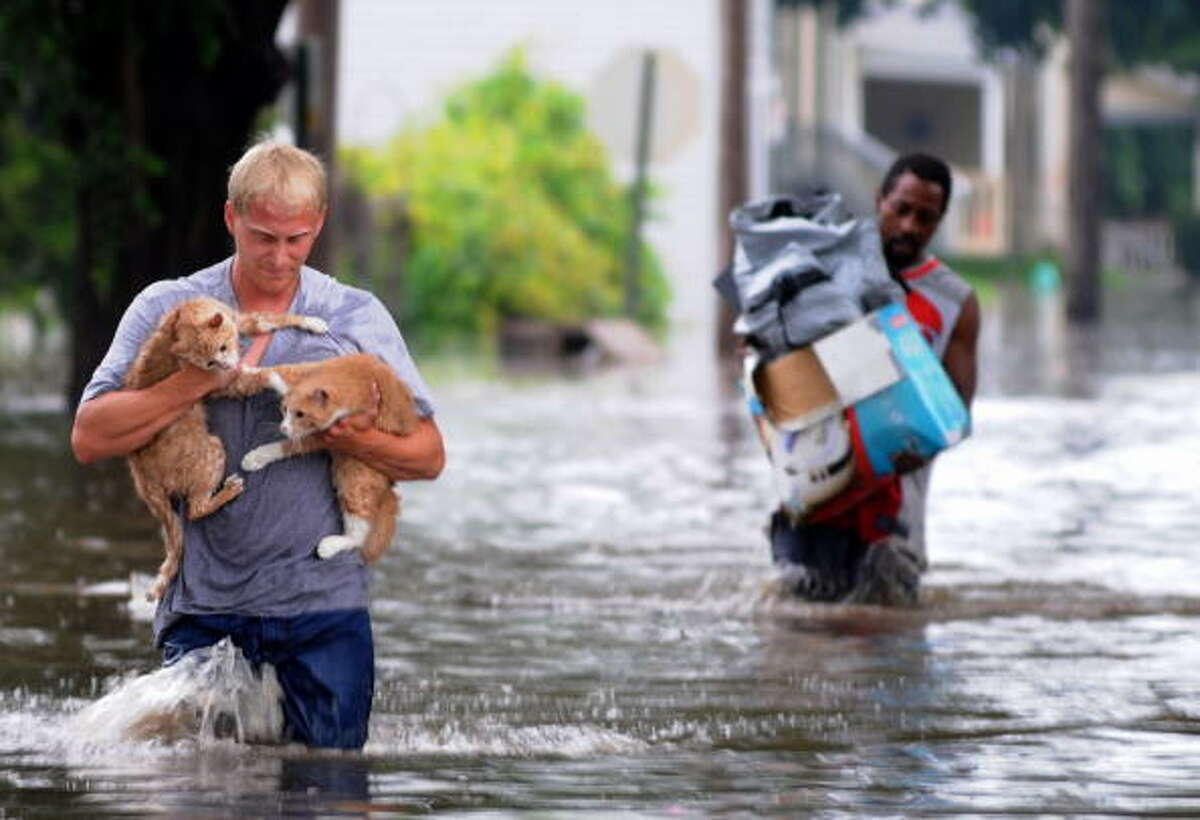 A photo similar to the original image by Harry Baumert shows Brandon Smith carrying his two cats, Fry and Bender, to dry land from their flooded and evacuated home on June 12, 2008 in Cedar Rapids, Iowa. >> See other hoaxes, fake images that came out of Hurricane Harvey.
