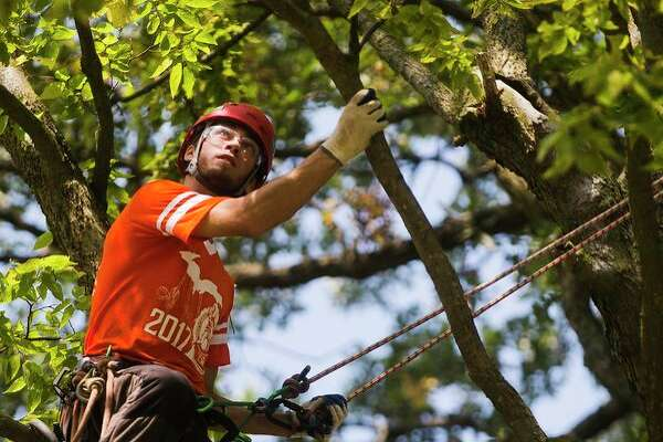 Cody Campbell of Sheridan competes in the work climb event during the Michigan Tree Climbing Championship hosted by the Arboriculture Society of Michigan on Saturday, September 16, 2017 at Emerson Park. (Katy Kildee/kkildee@mdn.net) More photos on page 7A