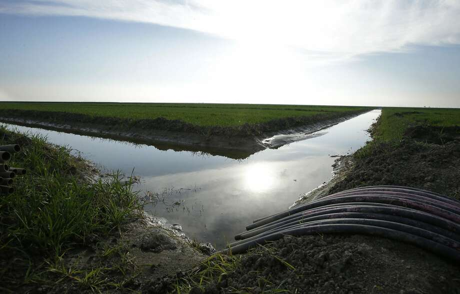 FILE - In this Feb. 25, 2016, file photo, water flows through an irrigation canal to crops near Lemoore, Calif. The federal regulators evaluating Gov. Jerry Brown's decades-old ambitions to re-engineer the water supplies from California's largest river are promising a status update Monday, June 26, 2017, as Brown's $16 billion proposal to shunt part of the Sacramento through two mammoth tunnels awaits a crucial yes or no from national agencies. (AP Photo/Rich Pedroncelli, File) Photo: Rich Pedroncelli / Associated Press 2016
