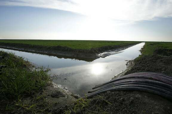 FILE - In this Feb. 25, 2016, file photo, water flows through an irrigation canal to crops near Lemoore, Calif. The federal regulators evaluating Gov. Jerry Brown's decades-old ambitions to re-engineer the water supplies from California's largest river are promising a status update Monday, June 26, 2017, as Brown's $16 billion proposal to shunt part of the Sacramento through two mammoth tunnels awaits a crucial yes or no from national agencies. (AP Photo/Rich Pedroncelli, File)