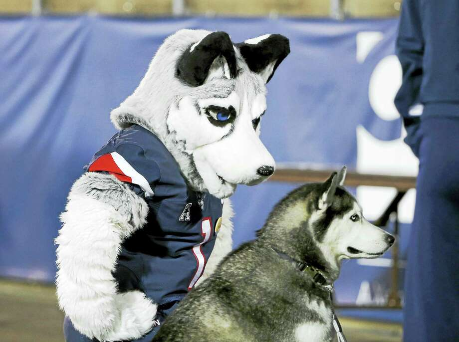 UConn mascot Jonathan the Husky kneels next to a husky dog during a game last season. Photo: The Associated Press File Photo  / FR158029 AP