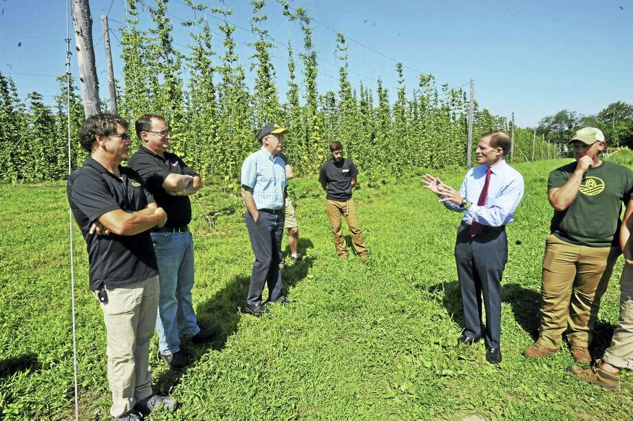 U.S. Sen. Richard Blumenthal visited Pioneer Hops in Morris Wednesday to speak with local hops farmers and beer brewers. Photo: Ben Lambert / Hearst Connecticut Media