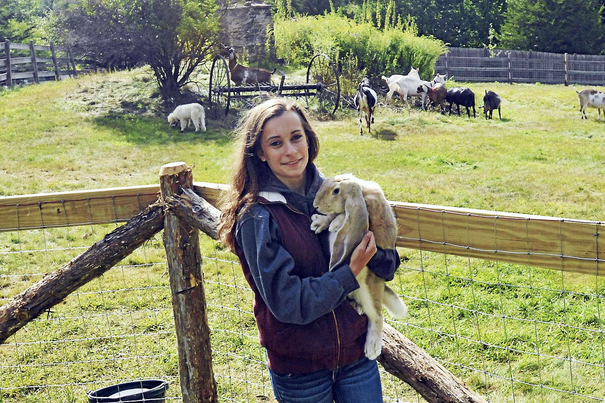 Grace Toy, above, holding an English Lop rabbit, and her family run Hops N Lops Farm in Harwinton.