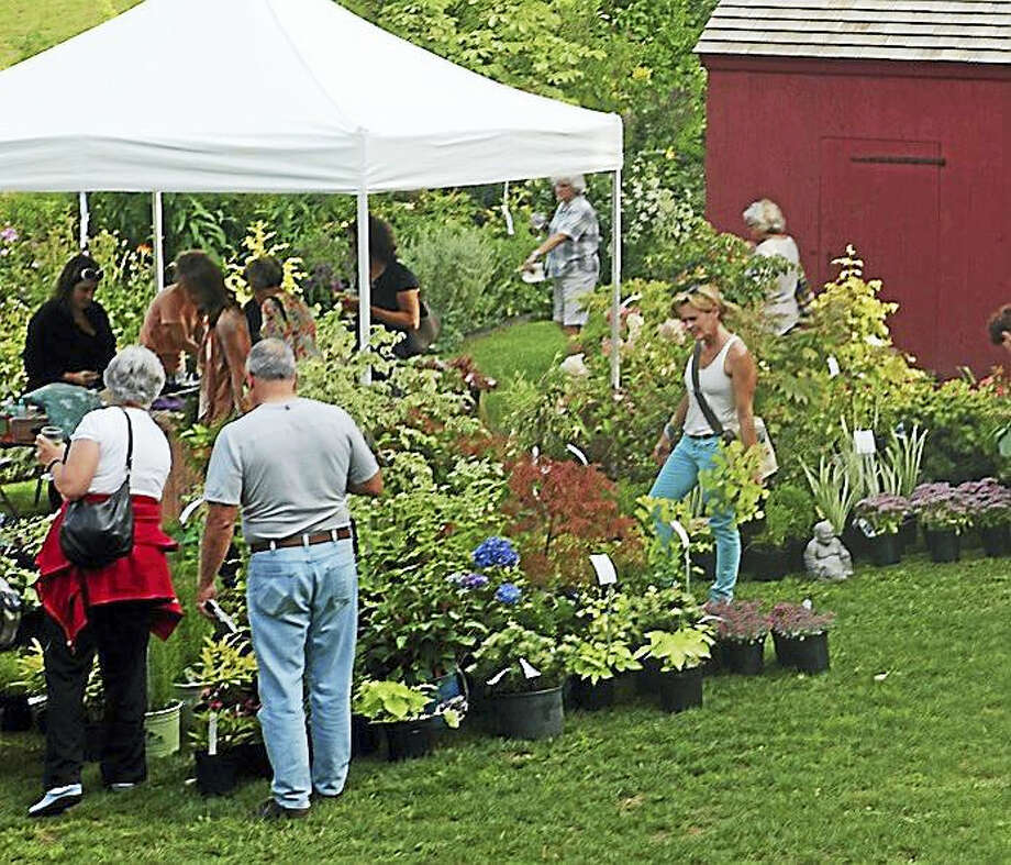 Hollister House Garden opens its gates for the annual 'Sale of Rare and Unusual Plants' Saturday and Sunday, Sept. 9-10. Photo: Contributed Photo