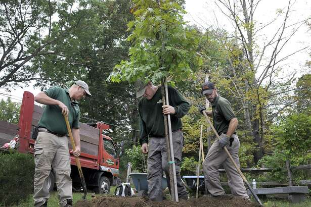 """Workers from New Milford's Meadowbrook Nursery plant a tree donated by the commpany to replace the """"Washinton Oak"""" in the Gaylordsville section of town on Wednesday. From left are, Jeff Stevens, owner, Jay Martin and employees Jay Martin and John Umbarger."""