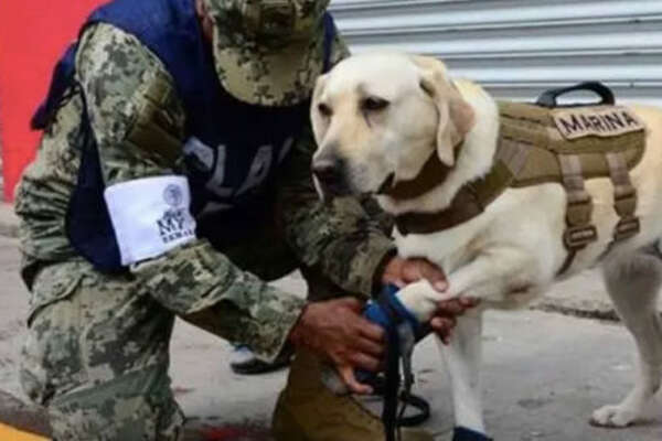 Frida, who sports black booties and goggles during her rescue efforts, has logged 53 total saves in her lifetime, with 12 this month alone following two deadly earthquakes in Mexico.