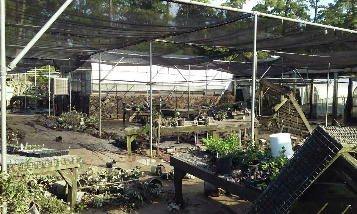 The garden collections nursery at Mercer Botanic Gardens on Aug. 30, after Hurricane Harvey.