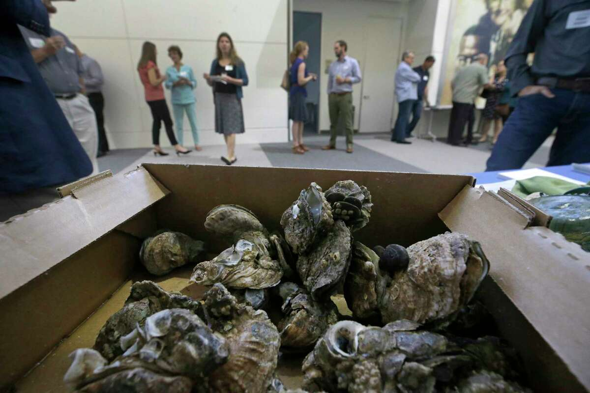 A box of dead oysters sits on a table as people gather in the lobby of the United Way, 50 Waugh Drive, before a panel discussion titled What's Going on With Oyster Harvest in Galveston Bay? hosted by Galveston Bay Foundation Tuesday, Sept. 19, 2017, in Houston. Tracy Woody, general manager of Jeri's Seafood, collected the dead oysters from Drum Village Reef in East Bay where he says the oysters are all dead. Flooding in the aftermath of Hurricane Harvey has swamped oyster beds with deadly freshwater. ( Melissa Phillip / Houston Chronicle )