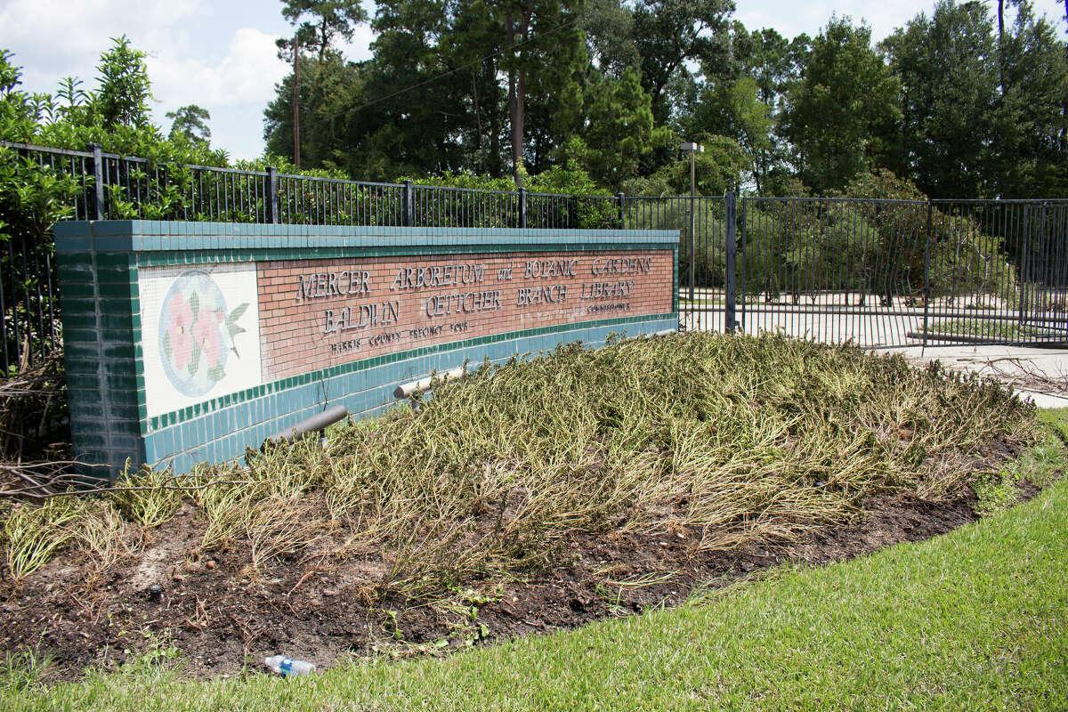 Hurricane Harvey's flooding caused severe damage at Mercer Botanic Gardens.