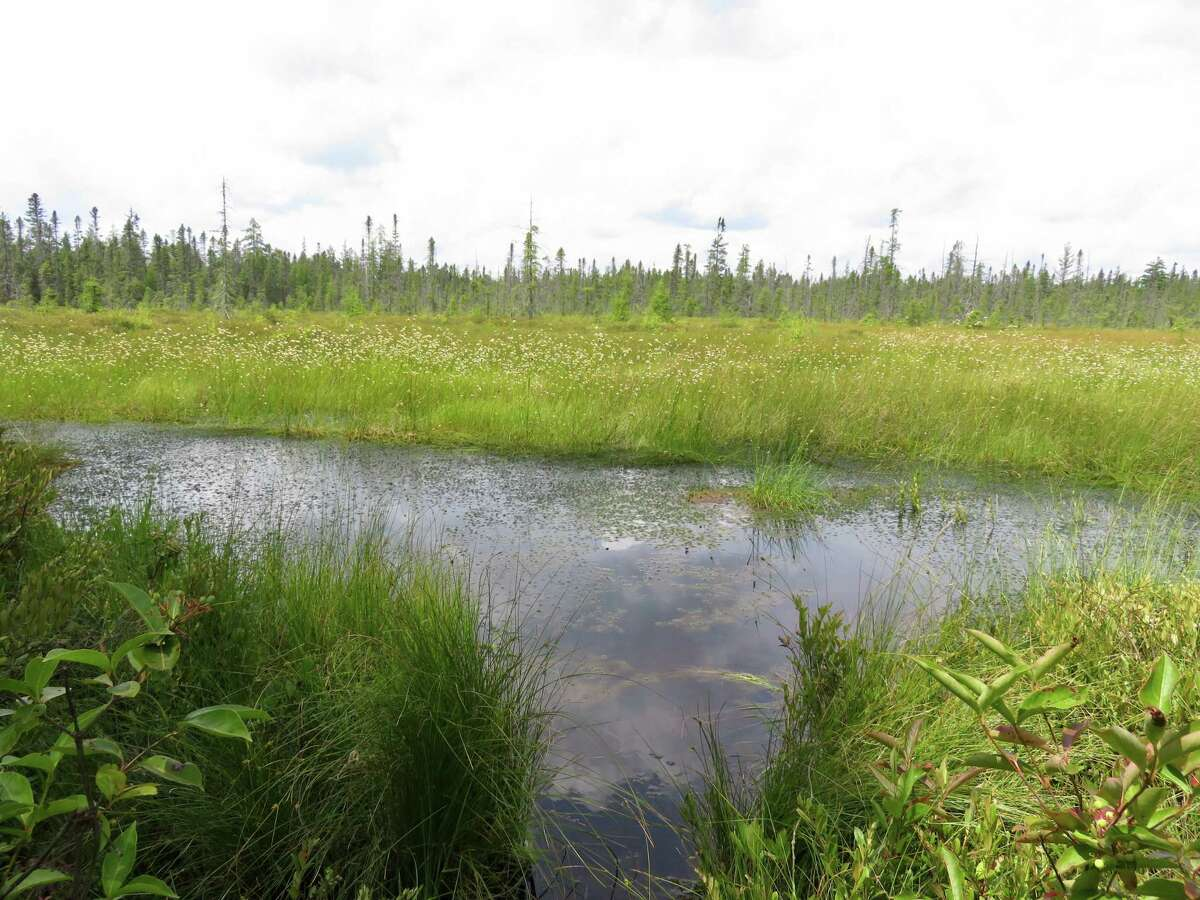 Open water framed by rows of tufted grass at Bloomingdale Bog. (Photo by Cecily Bailey)