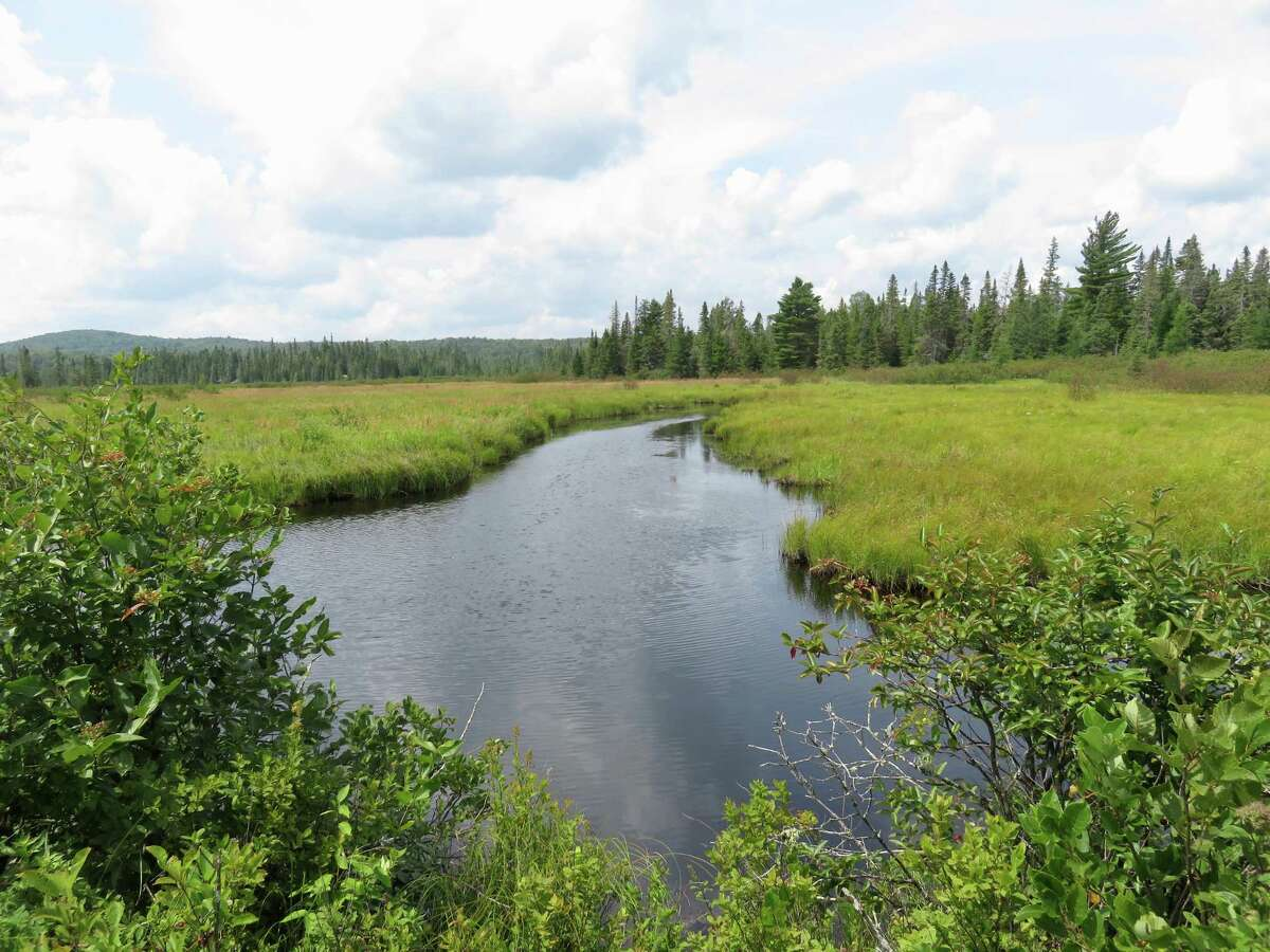 Open expanse of water at Bloomingdale Bog leading to a tree-lined backdrop. (Photo by Cecily Bailey)