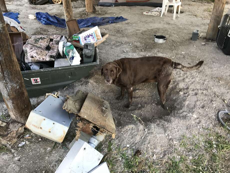 Tough life: Since Hurricane Harvey blasted Rockport, Jimbo Kleine said his 100-pound Labrador Daisy hasn't been the same. Three weeks after the storm, Kleine and his dogs have lived in a tent underneath what for more than 30 years was their family home.