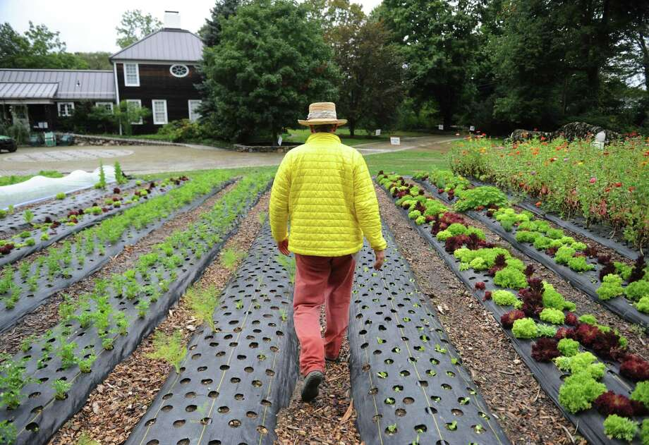 Farm owner Stephen McMenamin walks down the rows of vegetables at Versailles Farm in Greenwich. Photo: Tyler Sizemore / Hearst Connecticut Media / Greenwich Time