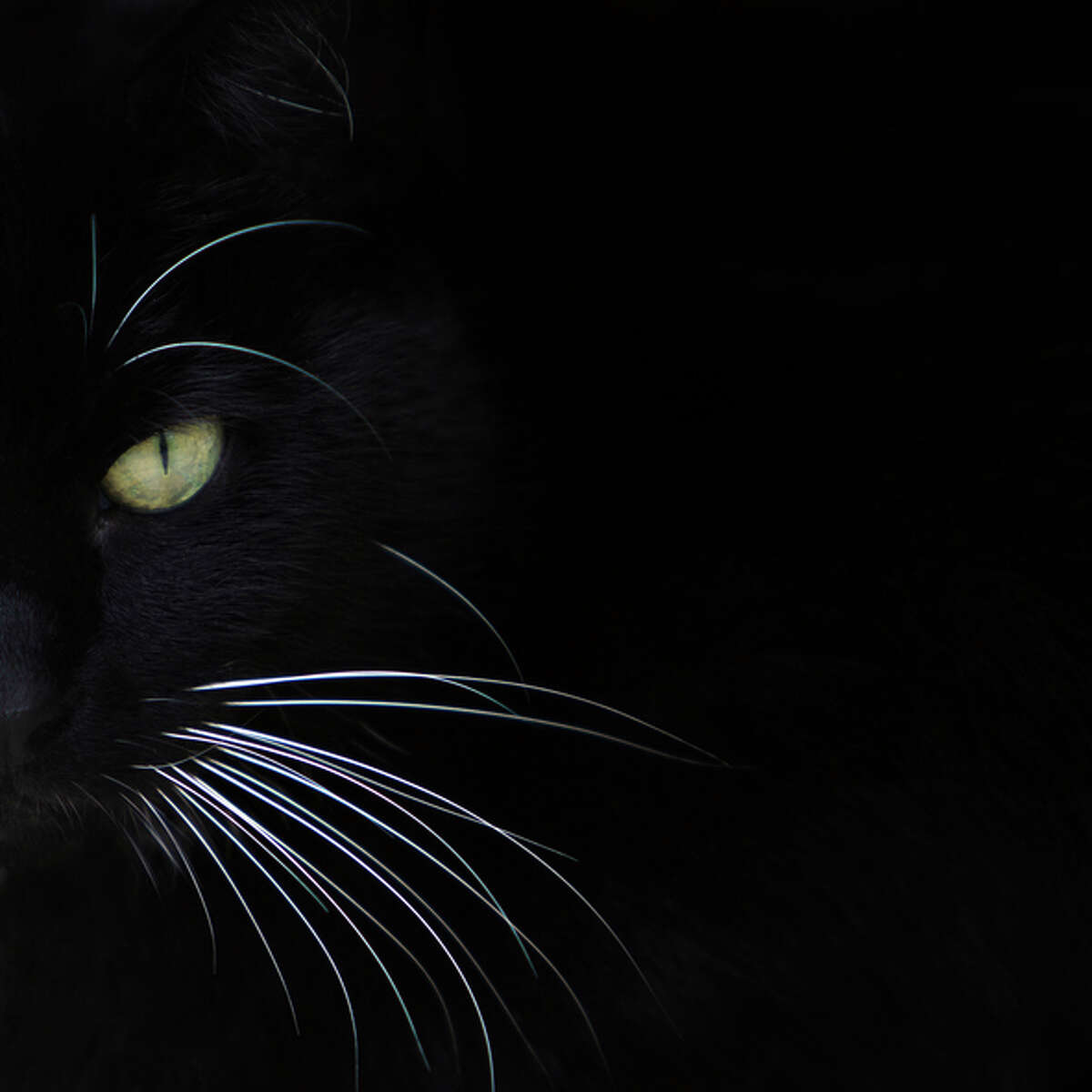 Bay City Black Cats