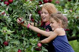 Summer Christiano, 8, of Monro and her  sister Kaela, 10, have fun during their annual apple picking pilgrimage at Lyman Orchards in Middlefield Thursday.