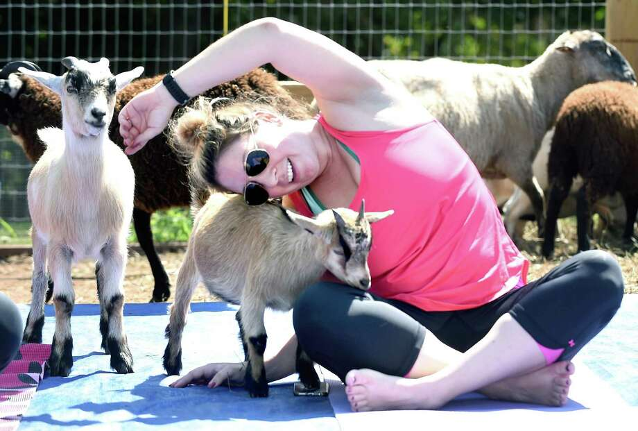 Kira Savino, of Clinton, takes part in a goat yoga class at a livestock rescue farm run by Leah Hilton in Hamden recently. Photo: Arnold Gold / Hearst Connecticut Media / New Haven Register
