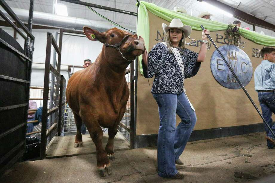 Splendora FFA's Madison Brown shows her grand champion steer during the East Montgomery County Fair Auction on Saturday, Sept. 16, 2017, at A.V. 'Bull' Sallas Park in New Caney. Photo: Michael Minasi, Staff Photographer / © 2017 Houston Chronicle