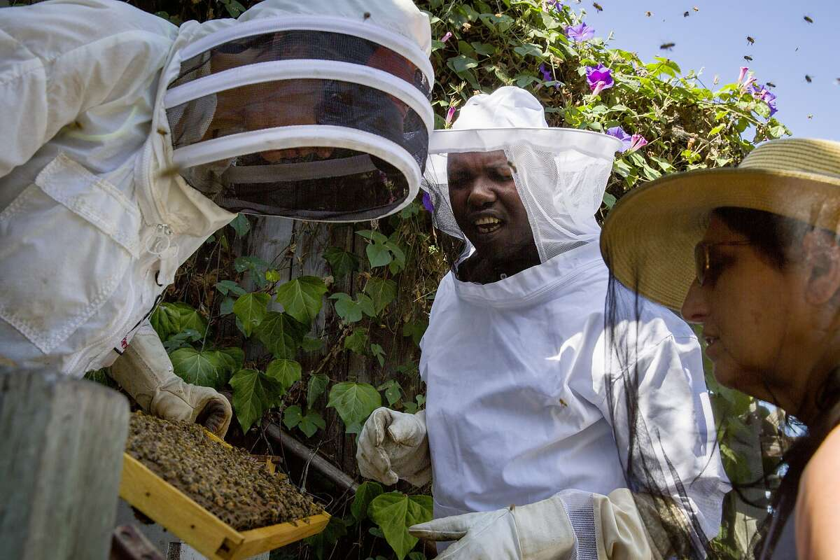 From left: Beekeepers Meredith May, Ojok Simon and Arial Gilbert check on the bees at the Connecticut Friendship Garden on Thursday, Sept. 21, 2017, in San Francisco, Calif. Simon, a blind beekeeper, became one of the three inaugural winners of the Holman Prize for Blind Ambition, a $25,000 award for blind and low vision adventurers offered by the LightHouse for the Blind and Visually Impaired in San Francisco.