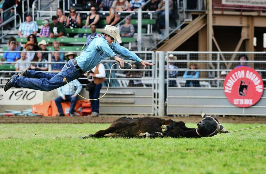 Tuf Cooper of Weatherford, Texas, leaps through the air towards a steer that is dragged through the grass by his horse during steer roping at the Pendleton Round-Up on Saturday, Sept. 16, 2017, in Pendleton, Ore. Cooper finished the event without making a qualified time. (E.J. Harris/East Oregonian via AP) Photo: E.J. Harris, MBR / East Oregonian