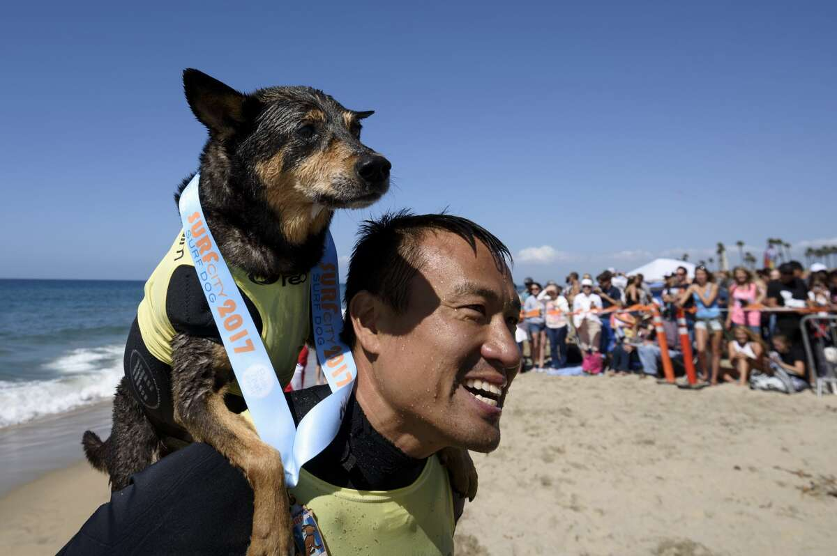 Surf dog Abbie, an Australian Kelpie, and owner Michael Uy after competing in the Surf City Surf Dog competition in Huntington Beach California on September 23, 2017. Over 40 dogs from the USA, Brazil and Canada competed in the annual Surf City Surf Dog Competition in which dogs surfed on their own or in tandem with their humans.