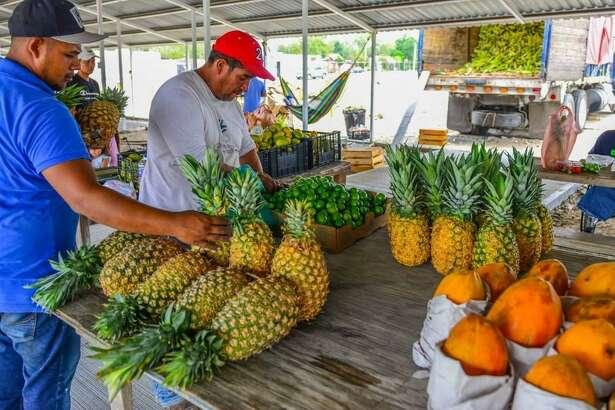 El Mercado de Frutas y Verduras que pronto operará en la vecina ciudad, contará con un cuarto frío para mantener en óptimas condiciones los productos que se ofertarán en el lugar.