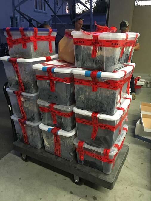 "700 pounds of psilocybin ""magic mushrooms"" with a street value of $1 million found in house in Berkeley, California. Destroy the cure, reward the poison. Ah, America. — Photograph: Berkeley Police Department."