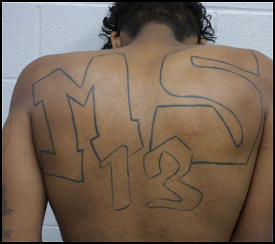 "A large ""MS-13"" tattoo could be seen on a gang member's back who was arrested by Border Patrol agents in Kingsville."