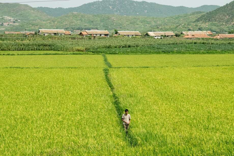 UNSPECIFIED, NORTH KOREA - AUGUST 24:  Farmer works in field on August 24, 2015, North Korea.  North and South Korea today came to an agreement to ease tensions following an exchange of artillery fire at the demilitarized border last week.  (Photo by Xiaolu Chu/Getty Images) Photo: Xiaolu Chu/Getty Images