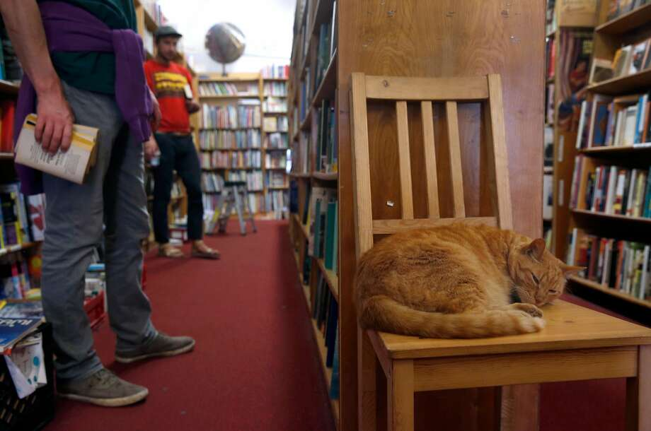 Owen, the resident cat at Aardvark Books in San Francisco. The shop's single-story, 3,125-square-foot building at 227 Church St. has been listed for $2.45 million — down from a 2017 asking price of $2.8 million. Photo: Paul Chinn / The Chronicle 2017
