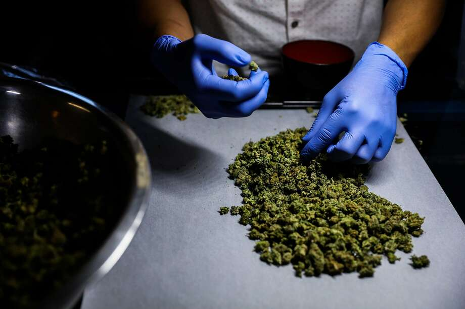 Employee Inmer Avalos sorts marijuana at the Green Cross cannabis dispensary in San Francisco. Photo: Gabrielle Lurie, The Chronicle