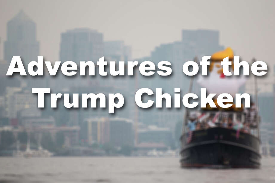 The inflatable chicken has been adopted by protests around the world as a way to call out President Trump. Here are some of the stops it's made along the way. Photo: GRANT HINDSLEY/SEATTLEPI.COM