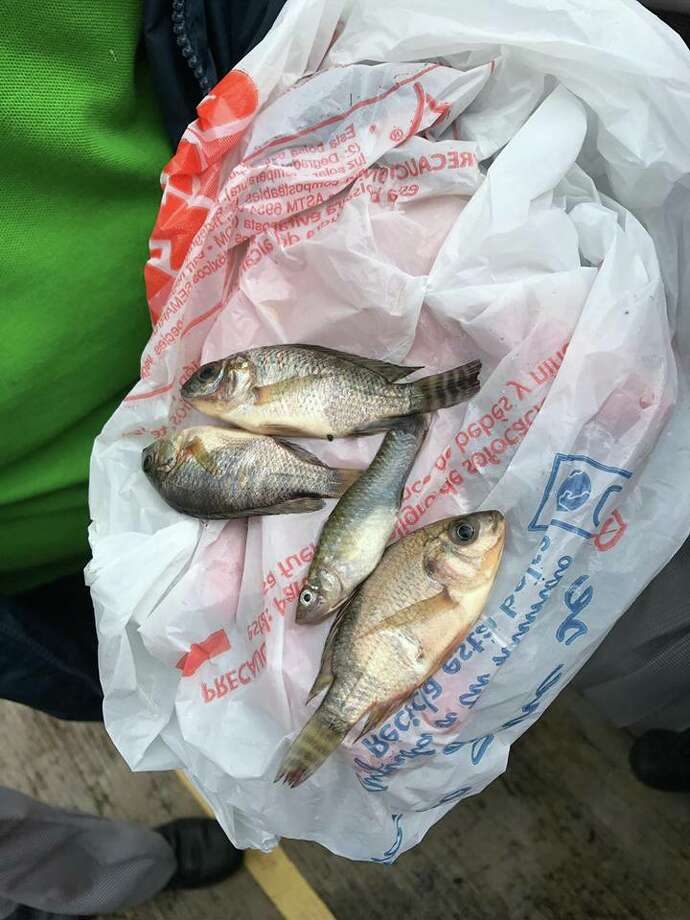 Photos posted by the Protección Civil Tamaulipas on Facebook show four small fish in a bag and another on a sidewalk, which apparently fell from the sky. Photo: Facebook/Protección Civil Tamaulipas
