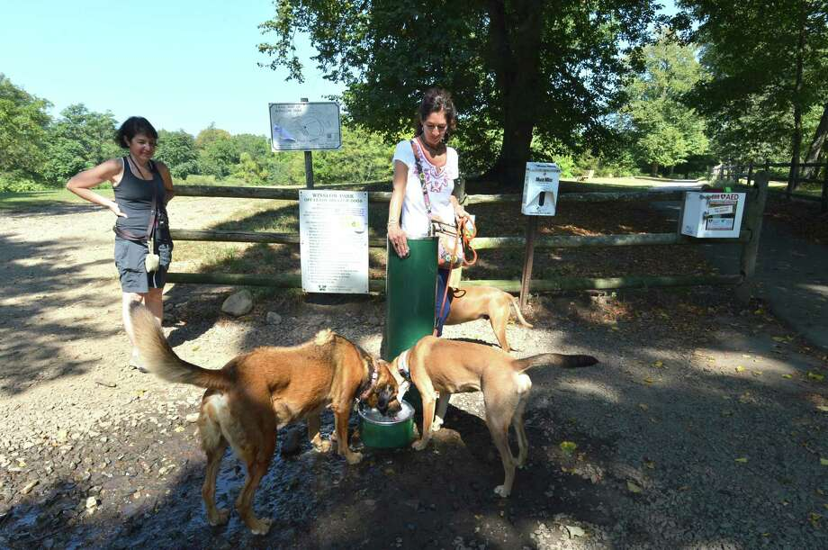 Dog walker Ana Rogers stops at the water fountain so her dogs can get a good drink of cool water after a long walk on a warm day at Winslow Park in Westport on Sept. 25. Photo: Alex Von Kleydorff / Hearst Connecticut Media / Norwalk Hour