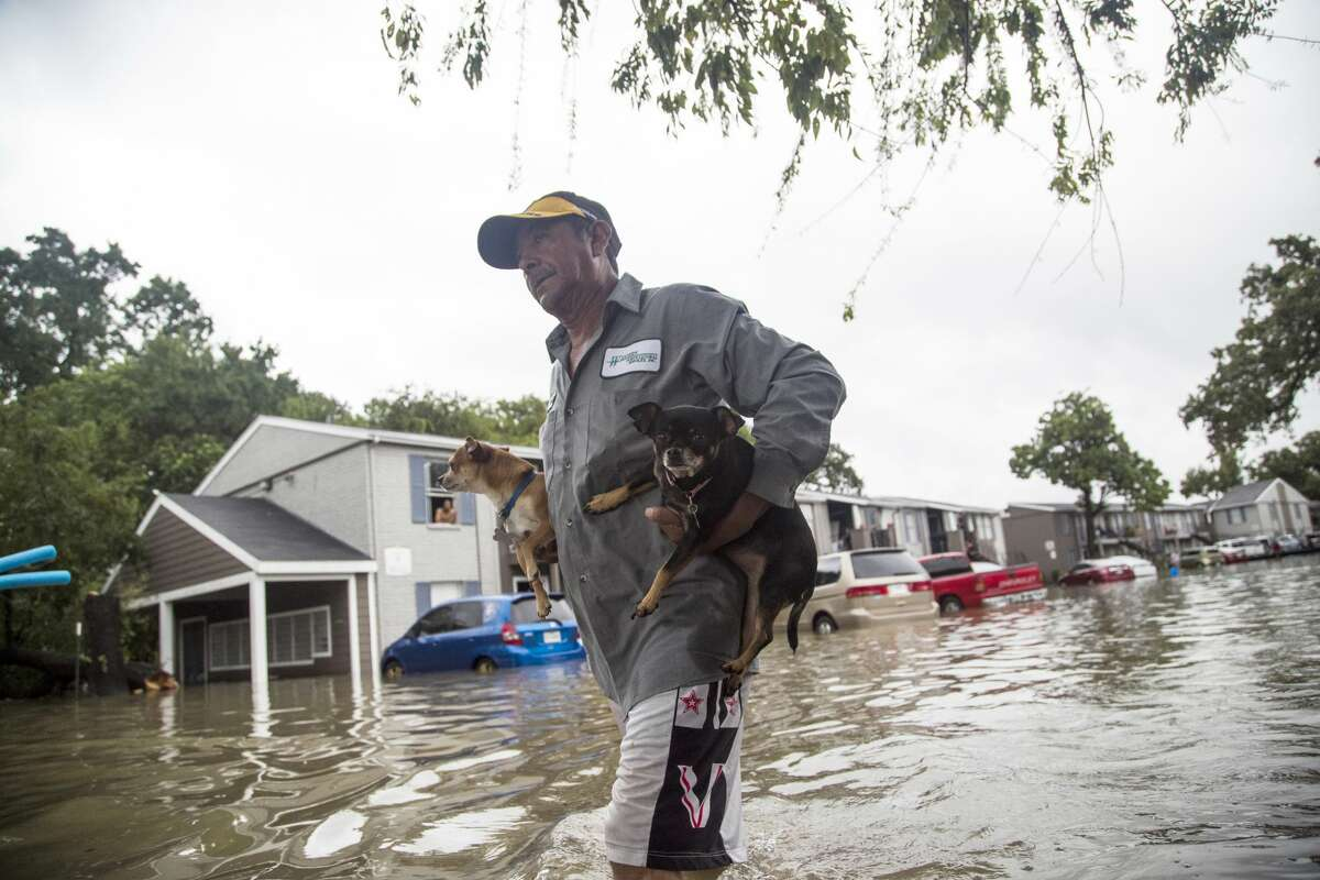 Felipe Grande removes his two dogs from his apartment at Bayou Parc at Oak Forest, Sunday, Aug. 27, 2017, in Houston. Click through the gallery for more photos of Hurricane Harvey's devastation.