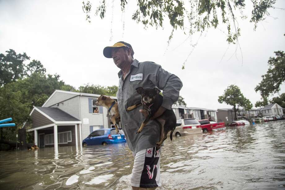 Felipe Grande removes his two dogs from his apartment at Bayou Parc at Oak Forest, Sunday, Aug. 27, 2017, in Houston.  Click through the gallery for more photos of Hurricane Harvey's devastation. Photo: Marie D. De Jesus/Associated Press