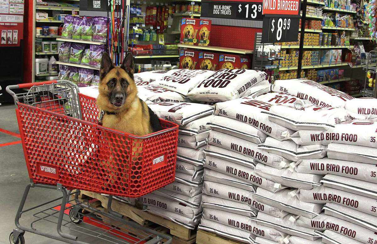 Kona sits in a cart at the new Tractor Supply Co. in Newtown, Conn., on Friday, Sept. 29, 2017. Kona's owner, Derrek Guertin, is just out of the frame.